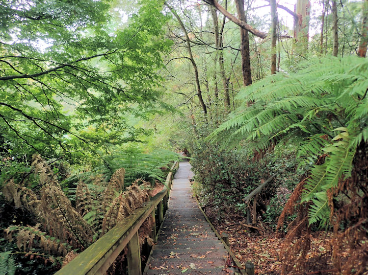 Telopea Road Trail onto Dandenong Ranges Tourist Track