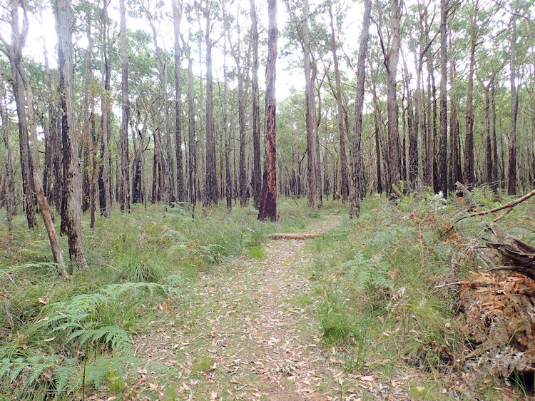 GSWW - Cobboboonee Camp to Fitzroy Camp