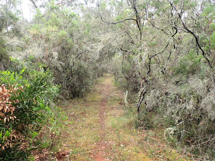 Great South West Walk section 8: Pattersons Camp to Simsons Camp