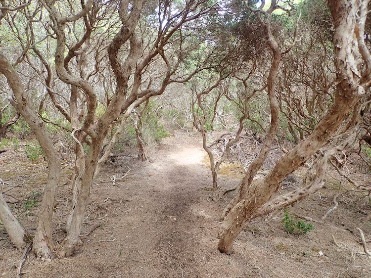 Great South West Walk Section 14 -Trewalla Camp to Mallee Camp