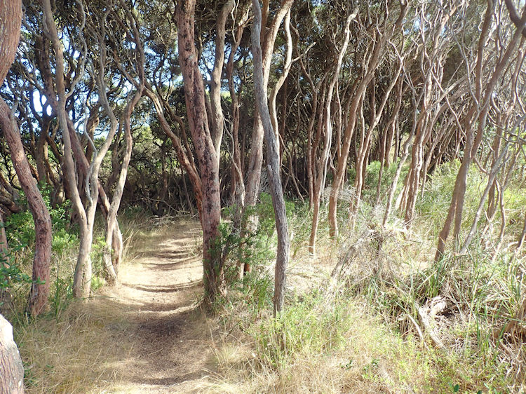 Great South West Walk Section 15 - Mallee Camp to Portland