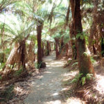 Giants Circuit Loop Anti Clockwise Hiking Trail Guide