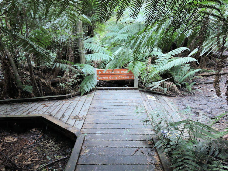Wirrawilla Rainforest Walk sign pointing to Myrtle Gully Circuit
