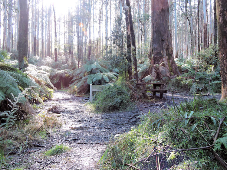 Myrtle Gully Circuit hiking trail junction